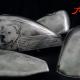 Custom Paint Harley Davidson Sportster 48 Lacksatz Bobber mit Blattsilber - old silver with ancient look